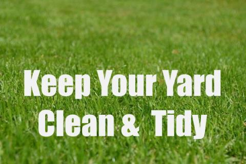 6 Effective Ways to Keep Your Yard Clean and Tidy